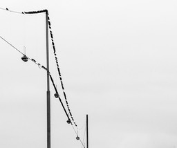 birds on a wire_1